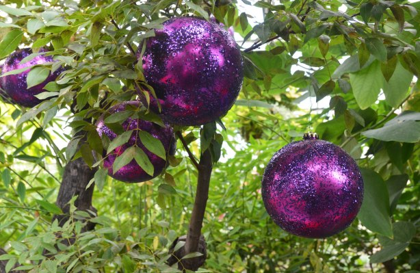 large purple Christmas balls with glitter on them, hanging from a tree