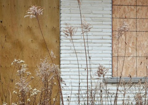 November weeds growing up in front of an abandoned motel, white brick wall with boarded up door and window