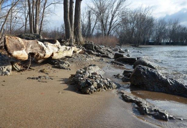 driftwood log, rocks, trees and sand on a beach