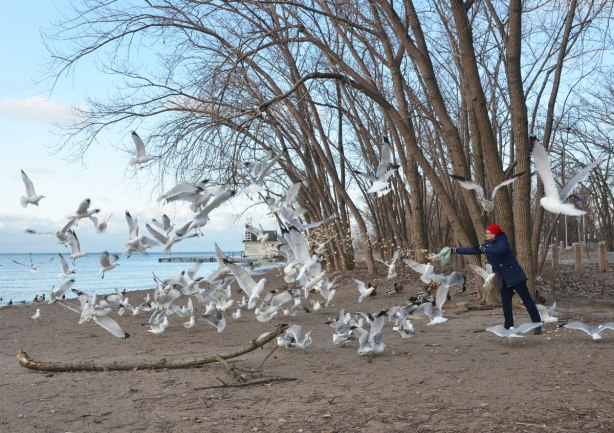 a woman wearing a bright red hat is feeding the seagulls, ducks and other birds at Cherry Beach. sand, water, Lake Ontario. There are lots of seagulls.