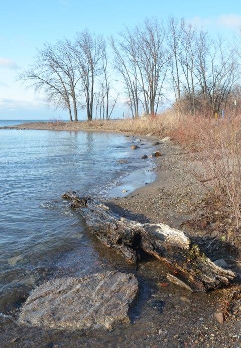 shoreline of Lake Ontario, driftwood, sand, trees, shrubs, in spring, no leaves