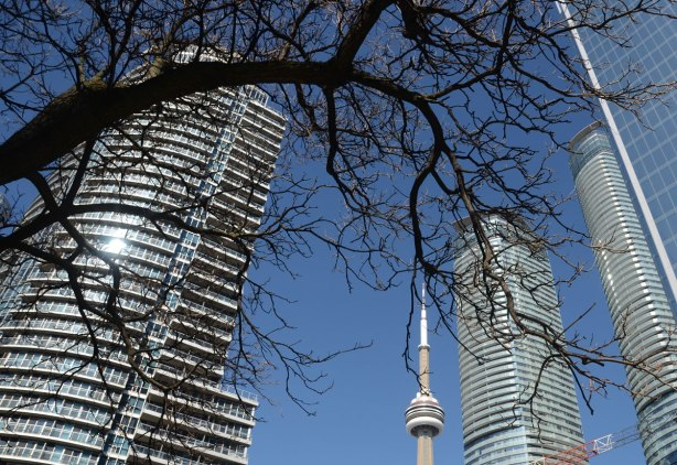 A large branch of a tree in the foreground, condos and the CN tower in the background. The curve of the tree branch looks like its wrapping itself around one of the tall condos.