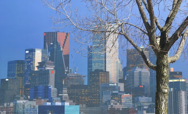A photograph by Aude Moreau of the Toronto skyline as the sun starts to set, sunlight reflected off the buildings, darkening blue sky. The picture is mounted on an exterior wall and there is a tree in front of it