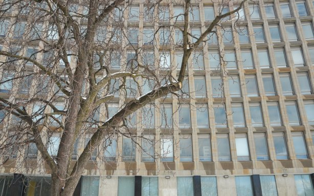 in winter, some snow, part of a large leafless tree in front of an office building with a sloght curve in it.