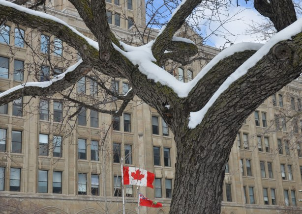 winter tree in front of a stone government building on Queens Park Circle, A Canadian flag and an Ontario flag are flying in front of the building.