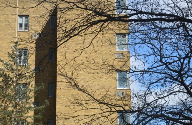 Horizontal branches of a tree growing in front of a low rise yellowish brown brick apartment building. Balconies, jutting out with the bright blue sky behind.
