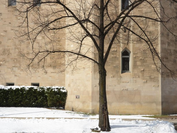 A lone smallish sized tree in winter is growing in front of a stone building on the University of Toronto campus, snow on the ground.