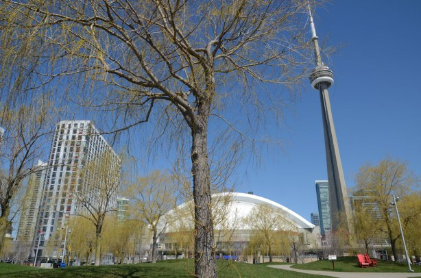 downtown Toronto, the white curved roof of the Rogers Centre with the CN Tower beside it. WIllow trees and grassy park are in front.