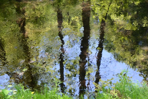 reflections of trees and blue sky in a creek, blue water, dark brown tree trunks and mottled greens of the leaves, in a ravine, in the city