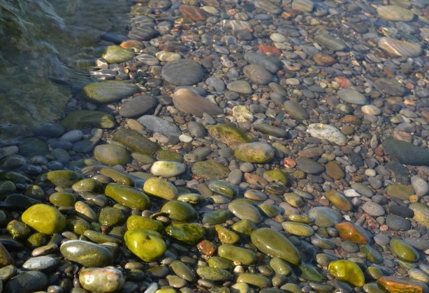 pebbles in greys and browns in the water near the shoreline of Lake Ontario. The pebbles closest to the shore are bright green with the beginnings of moss growth
