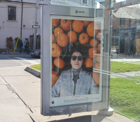iphone 6 ad on a bus stop wall of a woman lying in a field of pumpkins. Her head is surrounded by pumpkins.