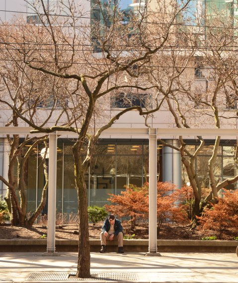 A man sits on the edge of a large planter with trees and shrubs in it in front of Roy Thomson Hall. There are no leaves on the tree yet.