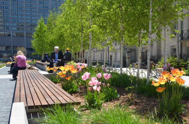 people sitting on benches amongst the tulips and birch trees of the peace garden at Nathan Phillips Square
