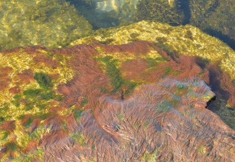 looking in the water beside some rocks. There is moss and algae in green, yellow, rust and brown swirling in the water of Lake Ontario