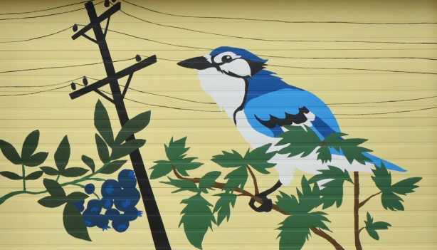 mural on a pale yellow garage door of a blue jay sitting on hydro wires, also a bunch of wild blueberries is in the image