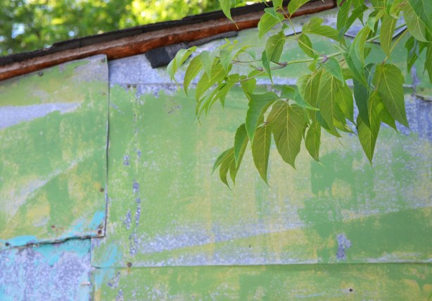 a used paintbrush is lying under the eaves of an old shed that is a mottled pale green and pale blue, branches of a tree and its leaves partially block the paint brush from view
