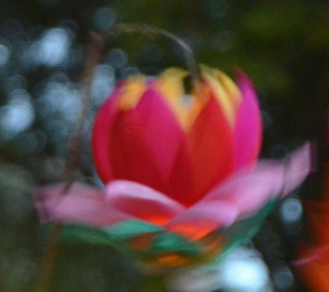 a paper lantern in the shape of a floating flower, out of focus
