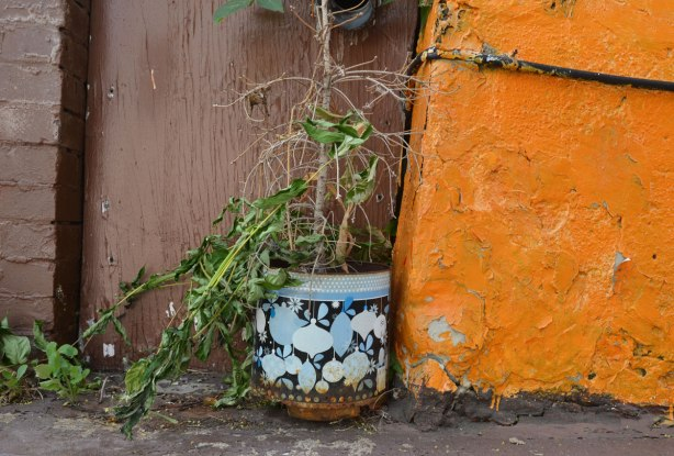 A planter in blues and blacks with a partially dead and drooping plant sits beside an old wall that has been painted bright orange. The wall behind the plant is brown.
