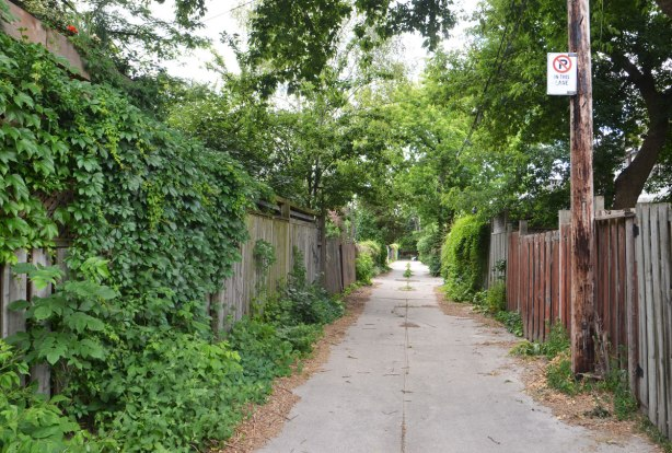 a lane with old wood fences and a lot of green, trees, weeds, ivy on the fences, shrubs beside the lane. narrow lane