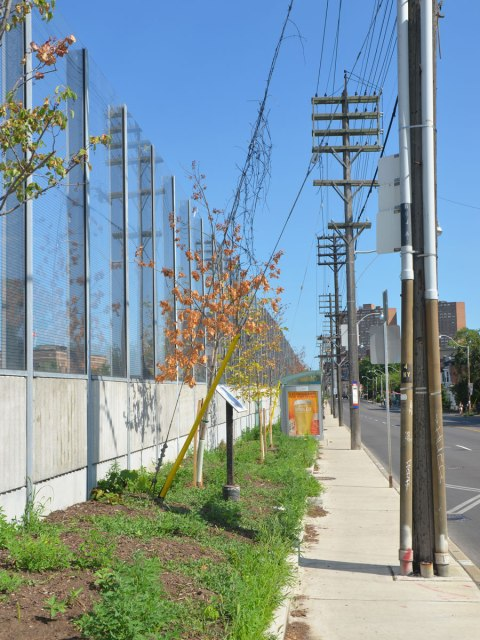 sidewalk right beside a road, with hydro poles on the sidewalk, a small stretch of green space (about a metre) befoew a large fence that is concrete on the bottom and glass on the top. A couple of small trees that are dying are in the green space.