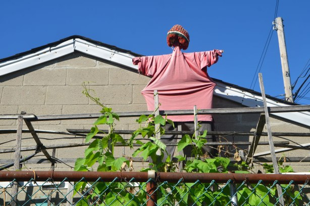 a scarecrow in pink shirt and wooly hat stands high over a garden, between a garage and a fence in an alley.