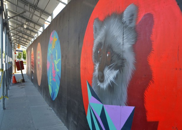 street art painting of a racoon's head, on wood construction hoardings.