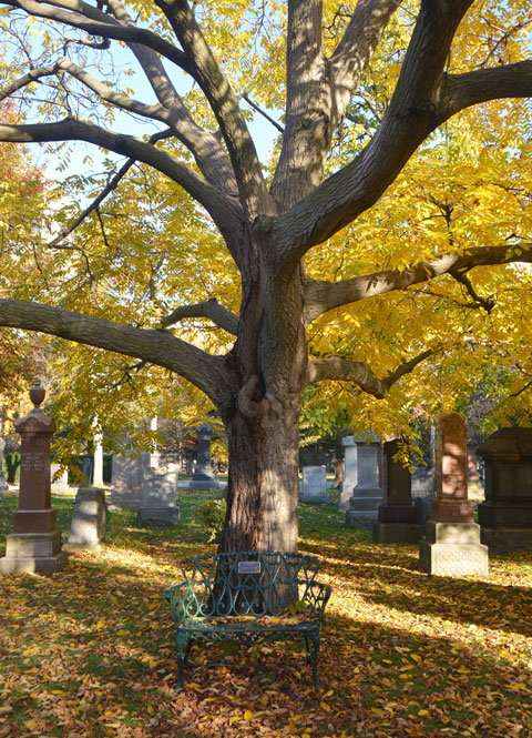 a metal bench in front of a large tree in a cemetery, tree has yellow leaves, autumn colours, change of season, fallen leaves on the ground around the bench