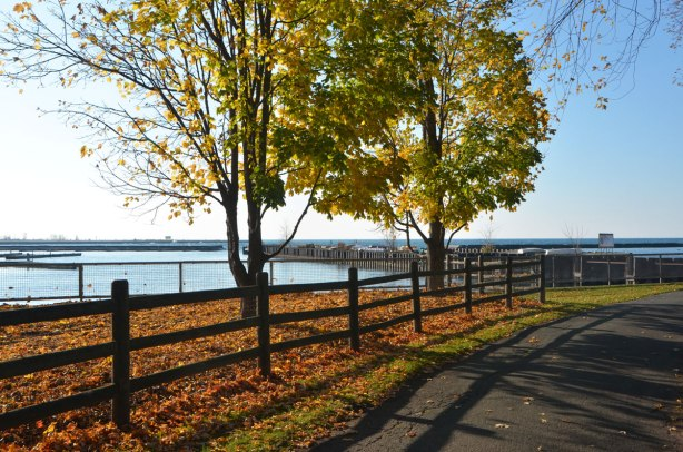 morning in the park, autumn, trees with some leaves still on, many leaves on the ground, wood railing fence, shadows, Lake Ontario, path, Coronation Park.