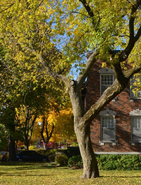 two storey brick house with large tree in front, smaller trees with yellow leaves in the background.