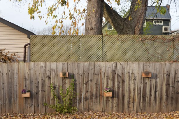 4 small wood boxes have been mounted on the side of fence, as planters, a couple still have purple flowers even though it's November and most of the trees have lost their leaves,