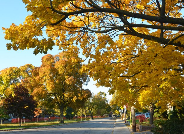 street scene, large trees with yellow and orange leaves, with a park in the center