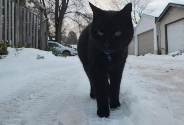 close up photo of a black cat in an alley with some snow on the ground, garage doors and a large tree