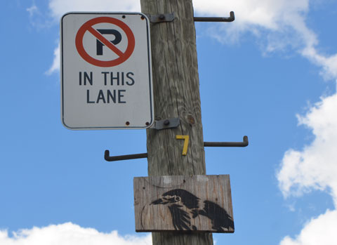 a small stencil of a black bird's head and neck on a piece of wood, mounted high on a telephone pole in a lane, along with a no parking sign, in Perly Family Lane in Toronto.