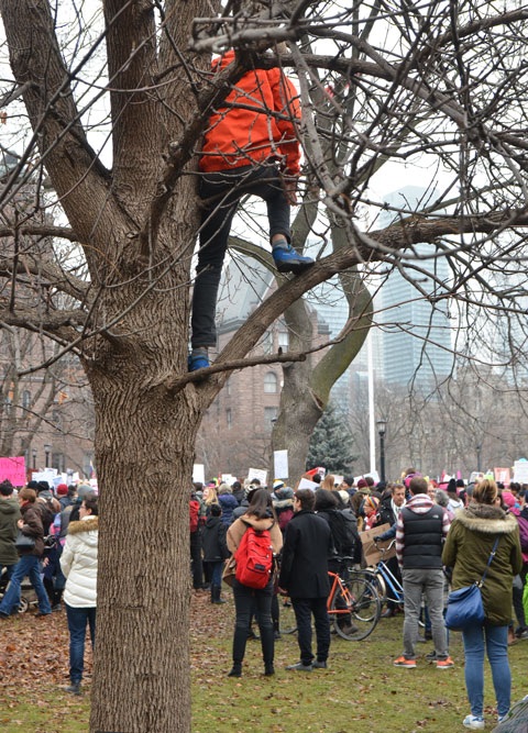 A person is up in a tree, looking over a crowd of people at Queens Park, Womens March, toronto