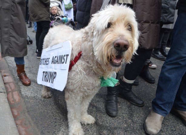 a white dog has a sign on its side that says Bitches Against Trump
