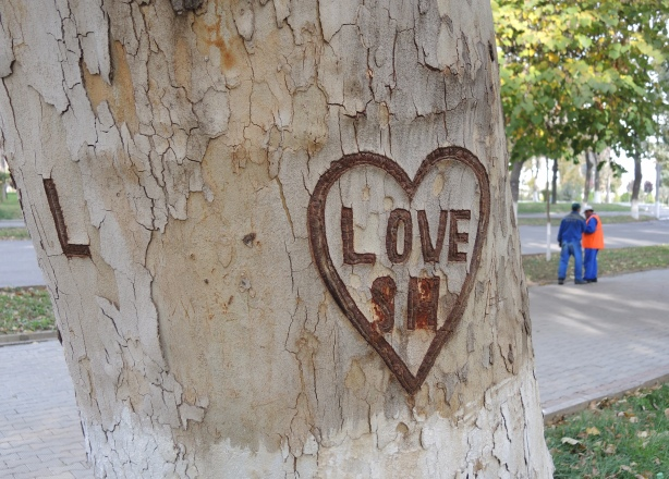 a heart and the word love have been etched into the bark of a tree