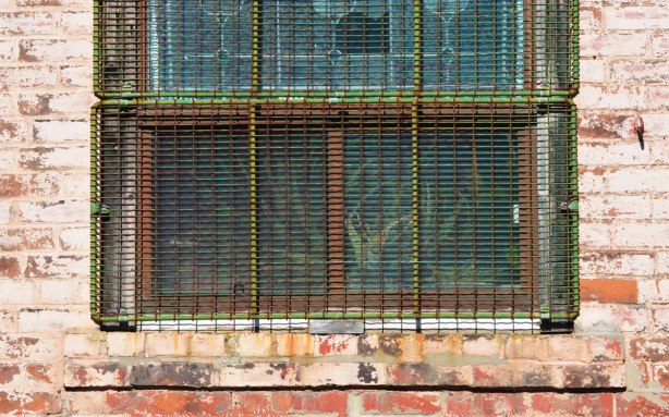 a metal grille that was painted green covers a window with a rusty metal frame and one pane cracked. A plant grows inside the window.