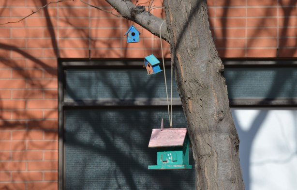 three little decorative bird houses hang from a tree branch by the sidewalk