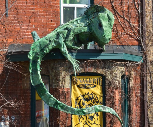 a life like model of a giant green gecko on the small roof over a window of a pet store.