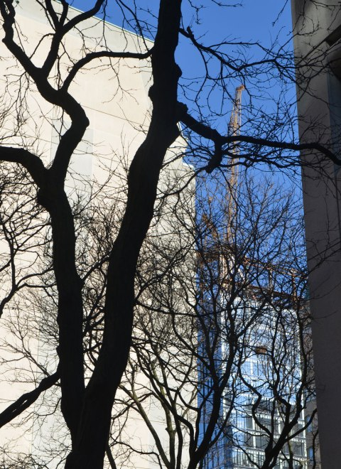 tree in silhouette in the foreground, buildings in light in the background,also blue sky
