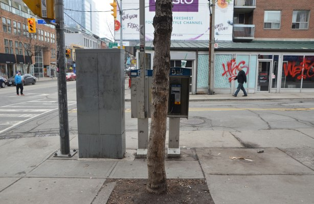 a lonely tree grows out of a square of dirt on the sidewalk, street scene around it.