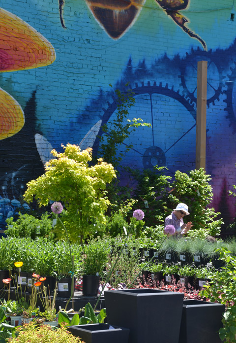 garden plants for sale, outdoors, in front of a large mural, bees, by Nick, on Queen st east