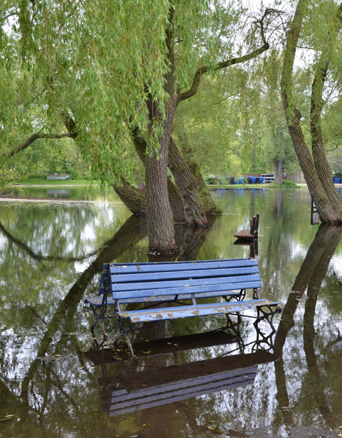 two blue benches back to back in a flooded section of a park, lots of trees also in the water, reflections, another bench in the background.