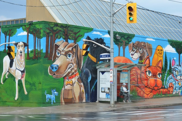 mural on the side of the Toronto Humane Society by Uber 5000 of bright, large, and colourful cats and dogs.  On the corner, both sides of the corner are in the mural, a bus shelter in front of the mural, a woman is sitting in the shelter.