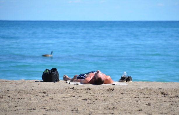 a man is lying on his back on Kew Beach, by Lake Ontario, a Canada goose is swimming by.