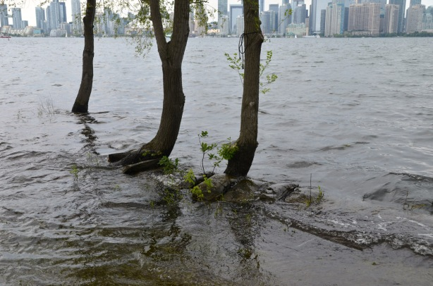 three small trees are in the water, with sandbags at their bases, most of the sandbags are covered by water. on the shore of Lake Ontario, Toronto skyline is in the background