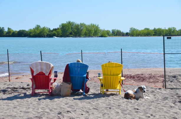 three Muskoka chairs, red, blue, and yellow, on the beach with the tops of three heads showing, a dog lies in the sand beside them, Lake Ontario in the background. An LCBO bag between two of the chairs. A large thermos mug on the armrest of one chair and a can of Palm Bay vodka drink on the arm of another. An orange plastice fence is in front of them because that part of the beach is closed because of high water levels