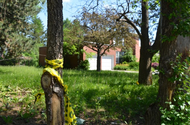 tree with yellow caution tape in front of an empty lawn with empty house in the background