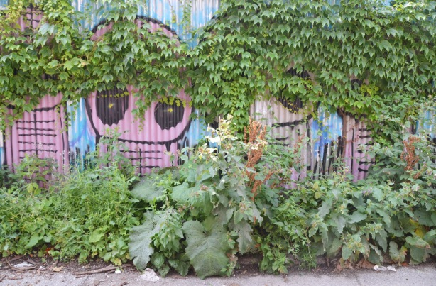 space alien mural painted on a corrugated metal fence are now partially covered with vines from the top and weeds from the bottom.
