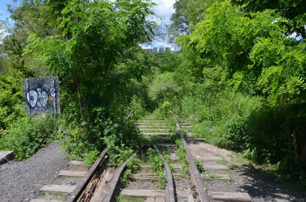 looking along an abandoned railway line, overgrown tracks, trees on either side, apartment buildings far away in the distance